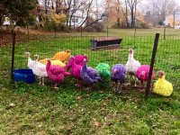 600x450xcolored-turkeys-Gozzi-Farm-600x450.jpg