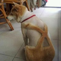 6-78078-dog-haircut-suspenders-1410386508.jpg