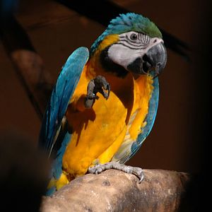 Macaw in south of Brazil