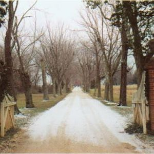 Sotterley Mansion Driveway c. 2004