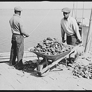 Unloading oysters, Rock Point, Maryland, 1941