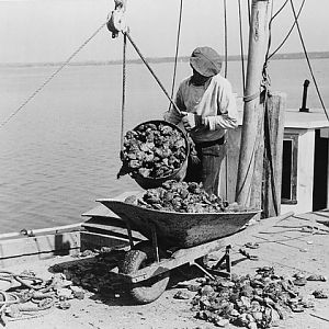 Unloading oysters, Rock Point, Maryland, 1941.