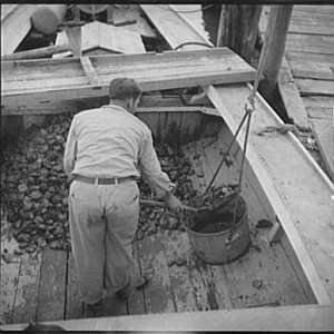 Unloading the oyster boat. Rock Point, Maryland, 1936