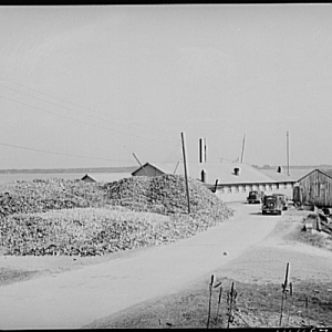 Oyster house and shuck pile. Rock Point, Maryland, 1941