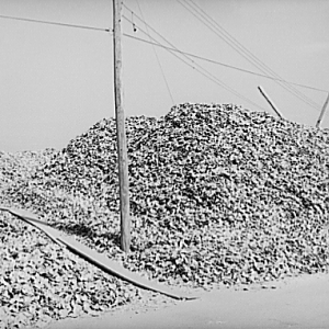 Shuck pile. Rock Point, Maryland, 1941