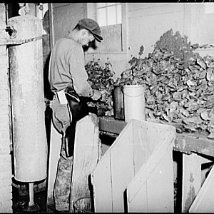 Oyster shucker at Rock Point oyster house. Maryland, 1941