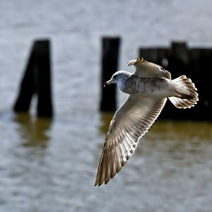 #37 Bird In Flight