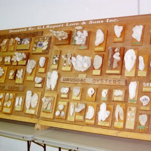 Display board showing different kinds of oysters and shells
