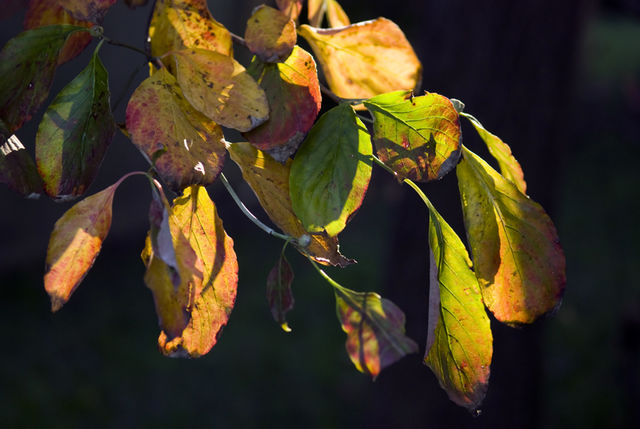 #38 A Sign of Fall Approaching