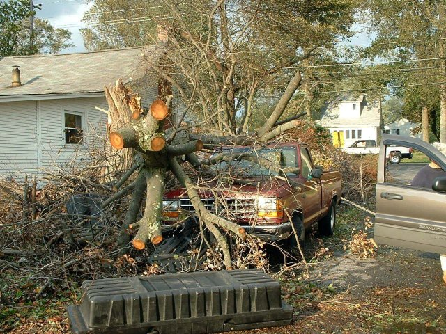 North-Beach-Truck-Tree